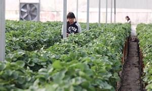 Tín dụng nông nghiệp công nghệ cao: Tiền đang chờ dự án