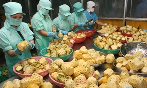 Xuất khẩu nông sản đang hướng đến mốc 36 tỷ USD