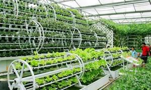 Khó khăn trong sản xuất nông nghiệp sạch và liên kết chuỗi