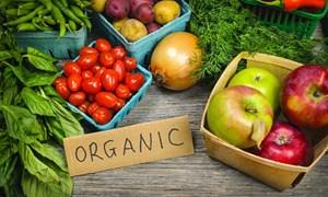 Nông nghiệp hữu cơ: Cần nhưng không nên ồ ạt