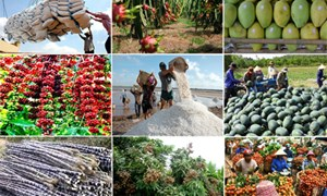 Bức tranh tươi sáng của ngành nông nghiệp với GDP cao nhất 13 năm qua