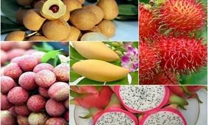 Truy xuất nguồn gốc hoa quả: Con đường tất yếu để mở rộng thị trường