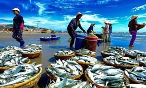 Biển miền Trung đã sạch và an toàn sau sự cố Formosa