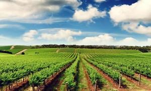 Đầu tư nông nghiệp bền vững: Cần cải thiện môi trường và chính sách