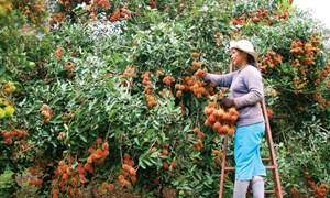 Trái cây Việt Nam từng bước thâm nhập thị trường thế giới