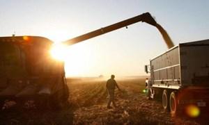 Nông sản Mỹ lao đao trước đòn thuế quan trả đũa của Trung Quốc