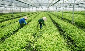 Thu hút đầu tư vào nông nghiệp, nông thôn: Thêm ưu đãi, bớt thủ tục
