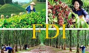 """Làm gì để FDI """"đổ"""" vào nông nghiệp nhiều hơn?"""