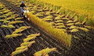 Để gia tăng chuỗi giá trị ngành nông nghiệp