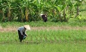 Thực trạng quản lý và sử dụng đất đai hiện nay