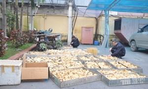Hải quan Quảng Ninh: 2 tháng, bắt 6 vụ vận chuyển gia cầm nhập lậu