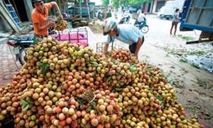 Cấm doanh nghiệp FDI trực tiếp mua nông sản