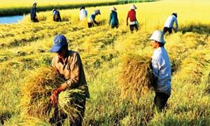 Nông nghiệp chia cắt khó bảo đảm lãi cho nông dân