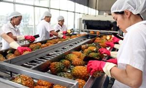 Nhiều khó khăn khi xuất khẩu rau quả sang thị trường EU