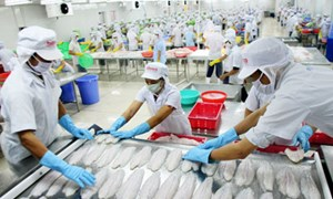 Kế toán chi phí và tính giá thành sản phẩm cho các doanh nghiệp chế biến thủy sản