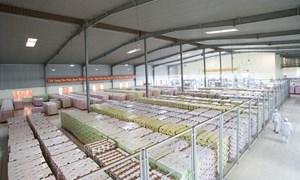 Công cụ 5S giúp Công ty Cổ phần Elovi Việt Nam nâng cao hiệu quả sản xuất, tiết kiệm chi phí