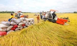 Agribank tích cực thực hiện các giải pháp tháo gỡ khó khăn cho sản xuất, kinh doanh