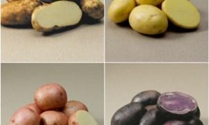 Khoai tây tươi Mỹ và những điều thú vị chưa biết