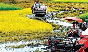 Phê duyệt 6 doanh nghiệp tham gia chương trình cho vay thí điểm phục vụ phát triển nông nghiệp