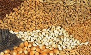Quy định về định mức chi phí nhập, xuất hạt giống lúa, ngô dự trữ quốc gia