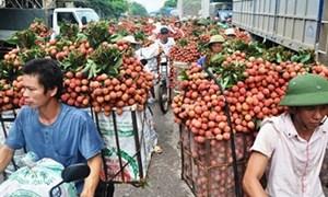 Mở rộng thị trường xuất khẩu quả vải tươi