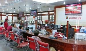 Agribank kịp thời hỗ trợ khách hàng khắc phục thiệt hại cơn bão số 12