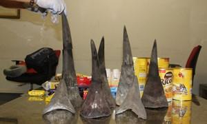 Cục Hải quan TP. Hà Nội phát hiện, bắt giữ gần 15 kg sừng tê giác