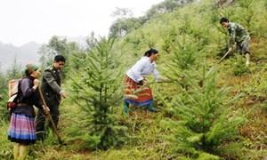 Đề xuất chính sách trợ cấp gạo cho các đối tượng trồng rừng thay thế nương rẫy