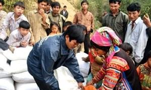 Gần 10.000 tấn gạo hỗ trợ đồng bào dân tộc thiểu số tự nguyện trồng và bảo vệ rừng