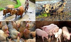 Bộ Tài chính đề xuất  nhiều giải pháp tăng cường hỗ trợ  cho khu vực nông nghiệp, nông thôn, nông dân