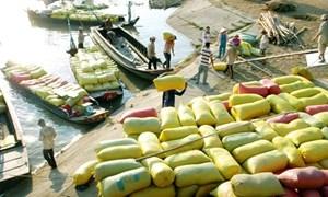 Gần 130 thương nhân tham gia thu mua, tạm trữ lúa gạo