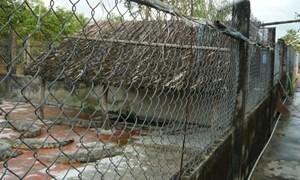 Kinh nghiệm làm giàu từ nuôi cá sấu ở Bạc Liêu