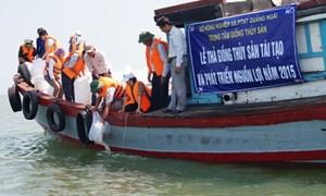 Quảng Ngãi: Tổ chức thả 1,2 triệu con tôm sú để phát triển nguồn lợi thủy sản