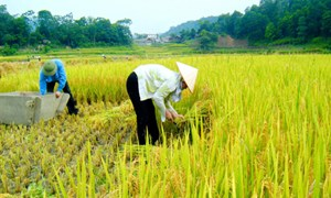 """Tiếp tục đẩy mạnh tái cơ cấu nông nghiệp, thực hiện giải pháp về """"tam nông"""""""