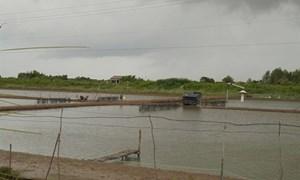 Bạc Liêu: Hơn 2.000 ha tôm thiệt hại