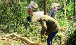 Dự án trồng rừng ở Bình Định: Hành động đúng, hiệu quả cao