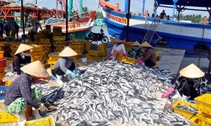 Tăng cường đầu tư phát triển hạ tầng nghề cá