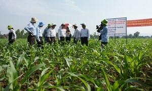 Chuyển đổi cơ cấu, đa dạng hóa cây trồng trên đất lúa
