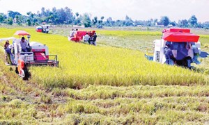 Khuyến khích các thành phần kinh tế đầu tư vào nông nghiệp