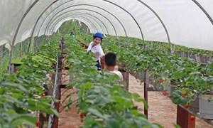 Đối tượng vay vốn nông nghiệp công nghệ cao chưa phát sinh vay ngân hàng