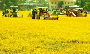 Hơn 3.000 xã đạt chuẩn nông thôn mới