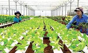 Khó khăn vẫn bủa vây doanh nghiệp nông nghiệp