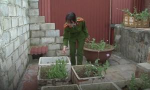 [Video] Nghi phạm bán ma túy, trồng thuốc phiện trên nóc nhà