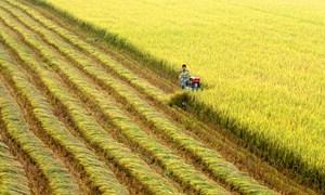 Một số giải pháp phát triển bền vững ngành nông nghiệp tỉnh Nghệ An