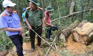 Bắt tạm giam 7 đối tượng trong đường dây phá rừng biên giới