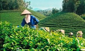 Đẩy mạnh cổ phần hóa các doanh nghiệp nông nghiệp