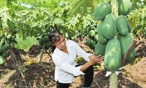 Đề nghị hỗ trợ 90% phí bảo hiểm nông nghiệp cho hộ nghèo