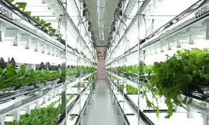 Nông nghiệp công nghệ cao - Chặng đường dài phía trước