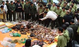 Chống buôn bán trái phép động vật hoang dã: Hãy liên kết và chia sẻ thông tin