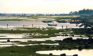 Lý Sơn mùa rạn biển